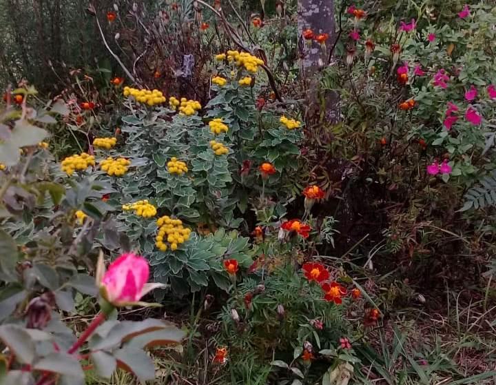 flores portada2